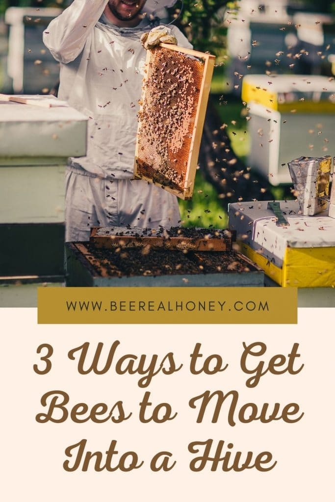 Pinterest pin, 3 Ways to Get Bees to Move Into a Hive