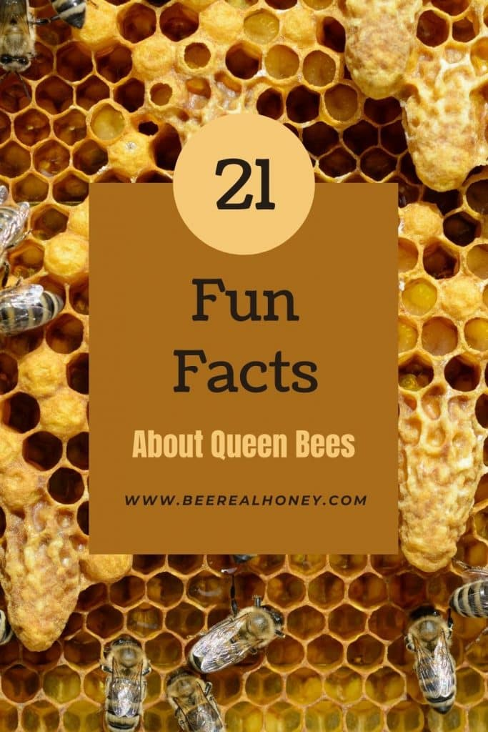 Pinterest pin, Fun Facts About Queen Bees